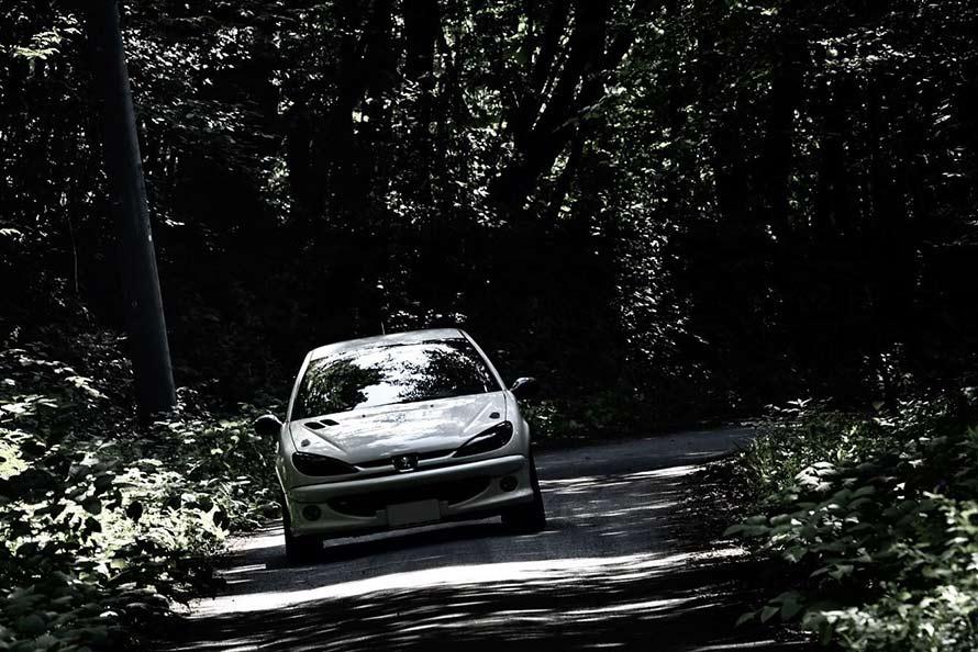 森の中を走るシーンはまるで一枚の絵画を観るように美しい