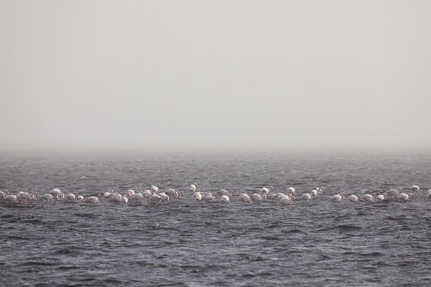 ナミビアの大西洋沿岸にはフラミンゴ。動物たちにとって楽園だ