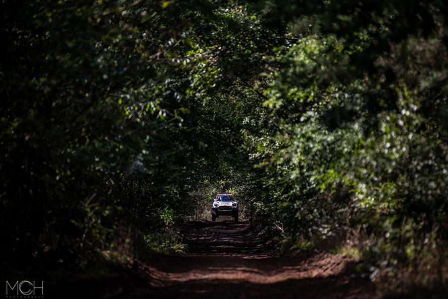 鬱蒼と生い茂る木立のなかを走るMINI。