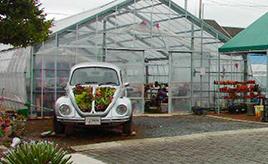 クルマのCMを手掛けた元ディレクターによる、夢のサボテン×名車ビートル。多肉植物店「サボテン相談室」