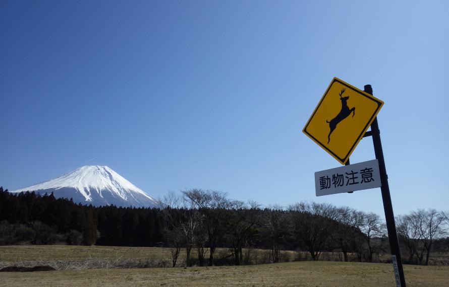 世界遺産で動物の交通事故が多発!? 建物がない博物館「富士山アウトドアミュージアム」の取り組み