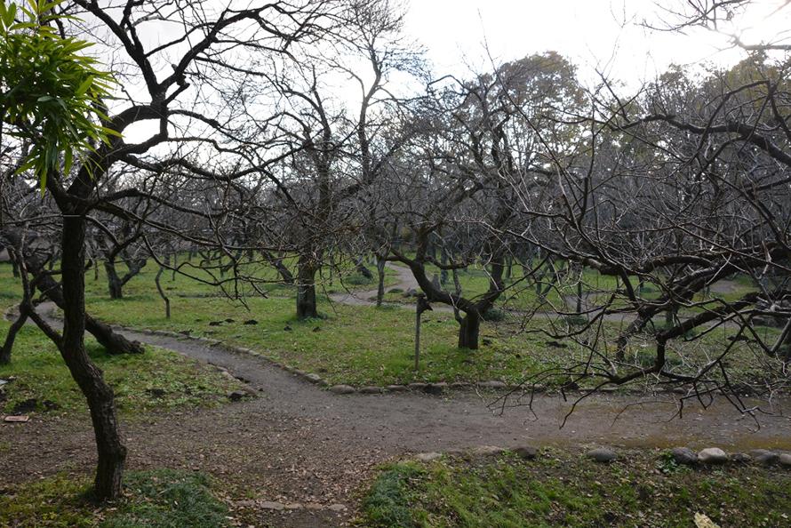 現在の谷保天満宮の梅林で当時とほとんど変わっていないとか。ただし、取材が12月ということで、寂しい風景となってしまいました。