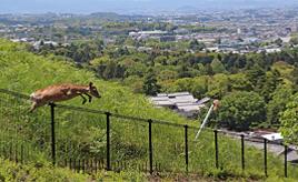 クルマも動物も守る!ロードキルを防ぐための設備