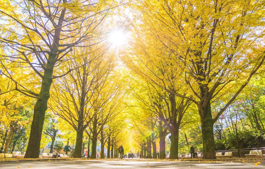 その歴史は明治時代から! 一般道の街路樹はどうやって選ばれている ...