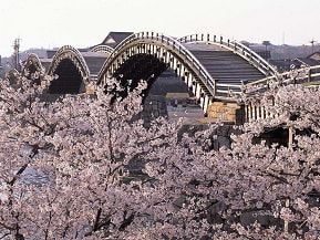 桜と木造橋が魅せる、これぞ日本の伝統美!錦帯橋へドライブ 山口県岩国市