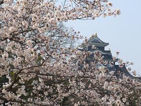 桜の庭園から岡山城を望む!日本三名園・岡山後楽園へドライブ 岡山県岡山市