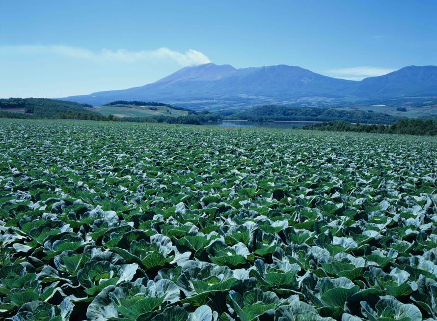 ヨーロッパを思わせる田園風景(群馬県嬬恋村)