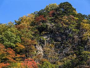本谷川渓谷の清流と紅葉に親しむ錦秋の一日 山梨県北杜市須玉町