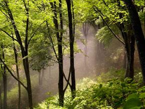 初秋の高原でブナ林ハイキングやフルーツ狩りを満喫 長野県飯山市