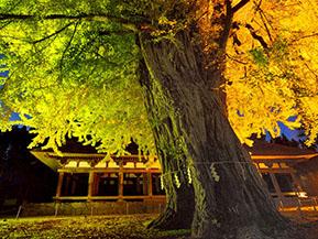 蔵座敷と長床の紅葉、新そばで秋の喜多方を満喫 福島県喜多方市