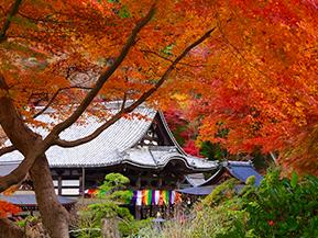紅葉の名刹や万葉文化館、古民家カフェを訪ねて 奈良県明日香村