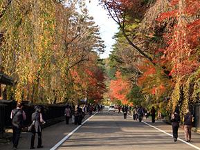 乳白色の温泉と紅葉に鍋料理、深まる秋を楽しむ 秋田県仙北市