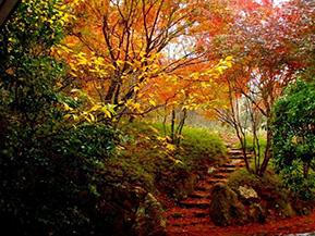色づく紅葉と星のまつり、星野村で秋を満喫 福岡県星野村