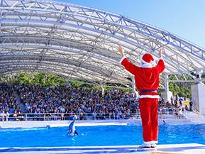 イルカとサンタ?イベントいっぱい海洋博公園へドライブ 沖縄県本部町