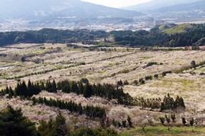 約6,500本の梅が圧巻、春の訪れを告げる梅まつりへドライブ 佐賀県伊万里市