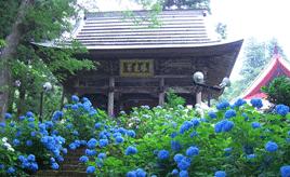 風情あるあじさい寺や舞い飛ぶホタルを観賞する、初夏のドライブ 長野県飯山市