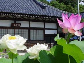 美しい花ハスが咲く古刹や道の駅発祥の駅へドライブ 山口県阿武町