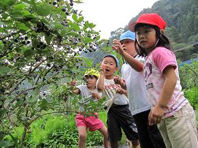 摘みたてをパクリ!ブルーベリー狩りが楽しめる農園へドライブ 愛知県豊根村