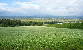 白い花がそば畑一面に咲く、初秋の喜多方市へドライブ 福島県喜多方市