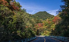 紅葉の名所がいっぱい!通仙峡へドライブ 山梨県北杜市須玉町