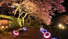 息をのむ幽玄の世界!光の中の石舞台古墳へ夜桜観賞ドライブ 奈良県明日香村