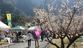 梅の花とほっこり温泉を満喫!秘境・梅ヶ島へ春満喫ドライブ 静岡市葵区梅ヶ島