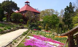 5月末から6月が見頃!ハーブの花が咲く香木の森公園へドライブ 島根県邑南町