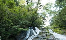 2年ぶりに一般公開!新緑まぶしい菊池渓谷へドライブ 熊本県菊池市