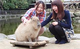 動物たちが自然のままにイキイキ!長崎バイオパークへドライブ 長崎県西海市
