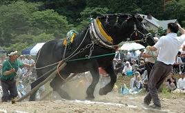 人馬一体のレースを観戦&話題の縁結びの神様にお参りしよう 岩手県遠野市