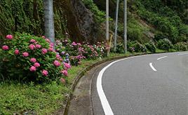 秘境の温泉地へ アジサイの咲く県道29号線をドライブ 静岡市葵区梅ヶ島