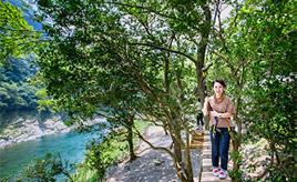 吉野川を見下ろす絶景ツリートレッキング!大歩危峡へドライブ 徳島県三好市