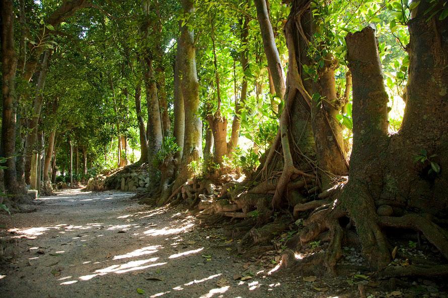 並木道は1㎞ほど続く。フクギの木は数千本に及ぶとされ、古いものは樹齢およそ300年といわれている。※写真提供:沖縄観光コンベンションビューロー