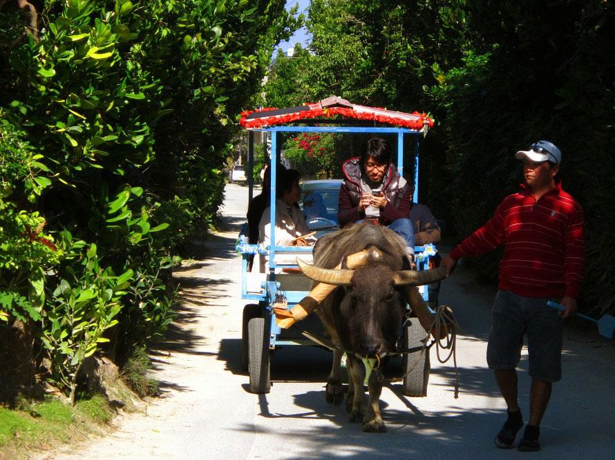 深い木立の中を水牛車でのんびり進んでみたい。ゆったりとした時間を過ごそう。※写真提供:沖縄観光コンベンションビューロー