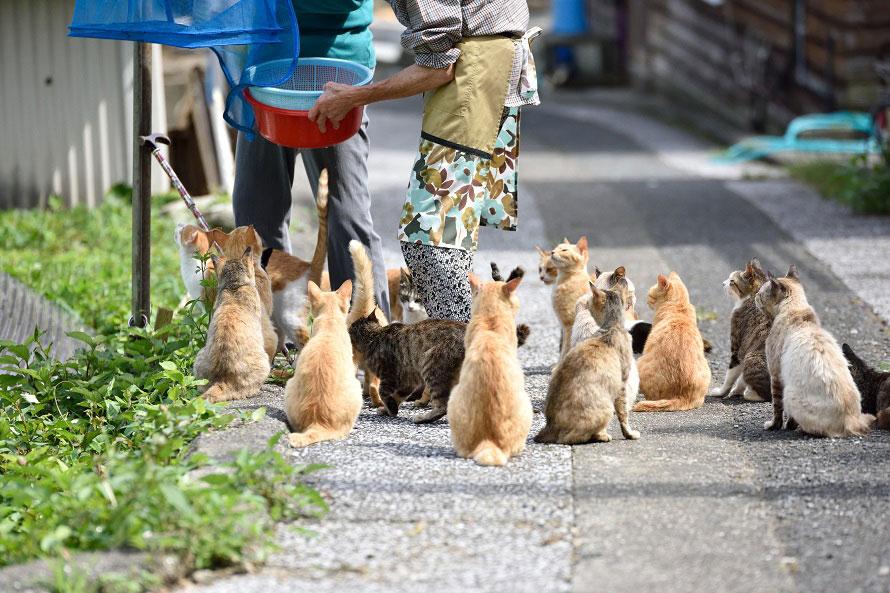 島には100匹近い猫が住んでいるが、そのほとんどは飼い猫ではなく島猫。