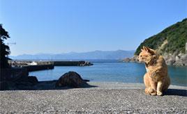 住民より猫の数が多い!猫の島と呼ばれる楽園「深島」へドライブ 大分県佐伯市蒲江