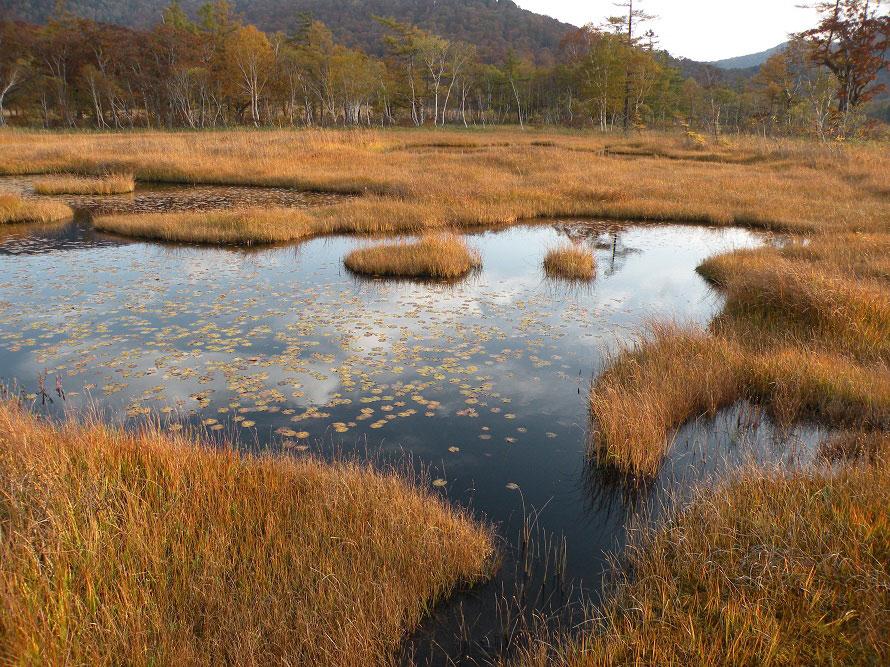秋は連休を除けば比較的観光客が少なく、静かな尾瀬を楽しめる。