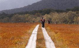 紅葉の秋!黄金から紅に色づく尾瀬の草紅葉を楽しむドライブ 群馬県片品村