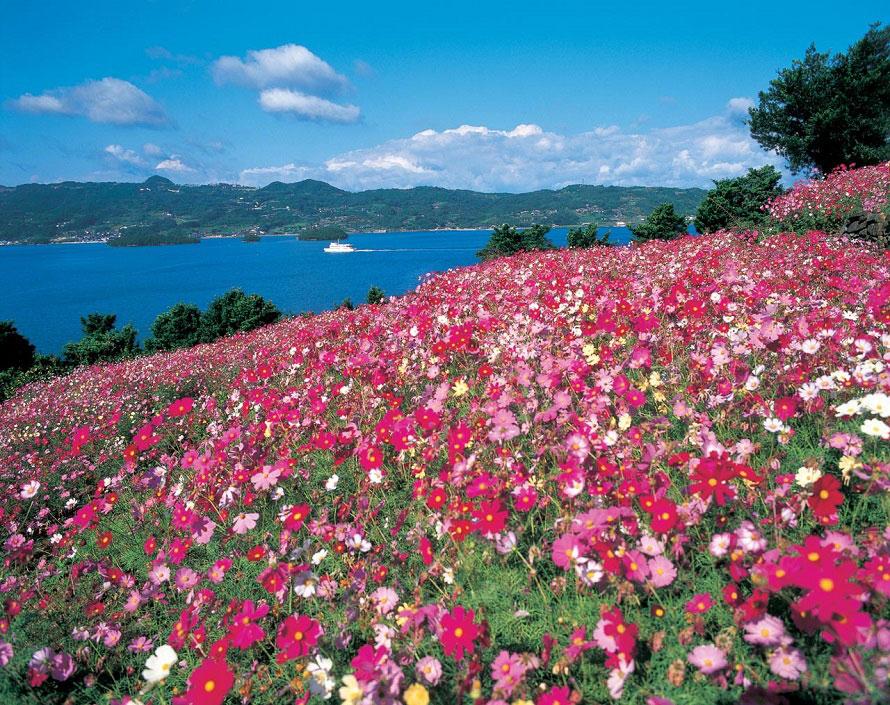 コスモスのほか、桜やチューリップ、アジサイなど、それぞれの季節に美しい花を咲かせる四本堂公園。