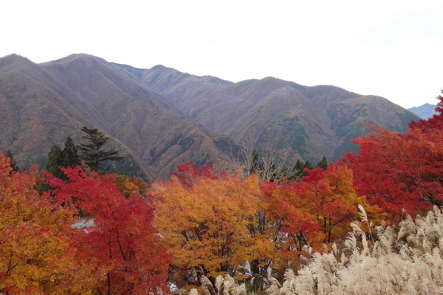 赤や黄色に色づいた木々とススキのコントラストが鮮やか。写真は標高1100mの三峰山周辺。