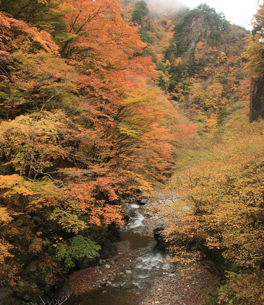 名勝・中津峡は奥秩父を代表する紅葉スポット。中津川沿いに約10㎞にわたって渓谷が続く。