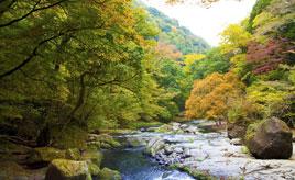 見頃は11月上旬!紅葉狩りを楽しむ渓谷へドライブ 熊本県菊池市