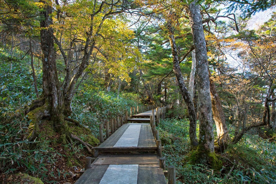 山頂には遊歩道が整備されており、散策や軽いトレッキングが楽しめる。