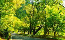 紅葉のみどり湖やロマンチックな星空カフェへドライブ 愛知県豊根村