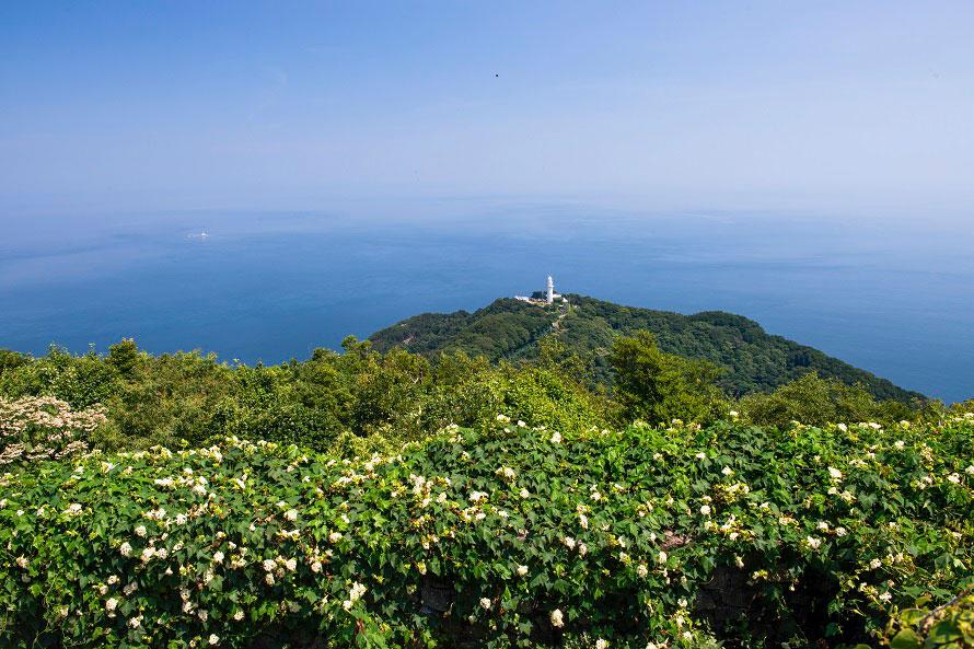 遠く見えるのは、昭和56年(1981)に完成した鶴御崎灯台。