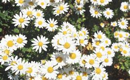 野路菊が咲く展望公園や九州最東端の鶴御崎へ!絶景ドライブを満喫 大分県佐伯市蒲江