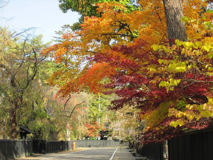 昼間の武家屋敷通り。赤や黄の紅葉が黒塀に映え、通り全体がいっそう雅やかな雰囲気に。