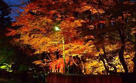 黒塀に映える紅葉のライトアップは幻想的!角館・武家屋敷通りへドライブ 秋田県仙北市