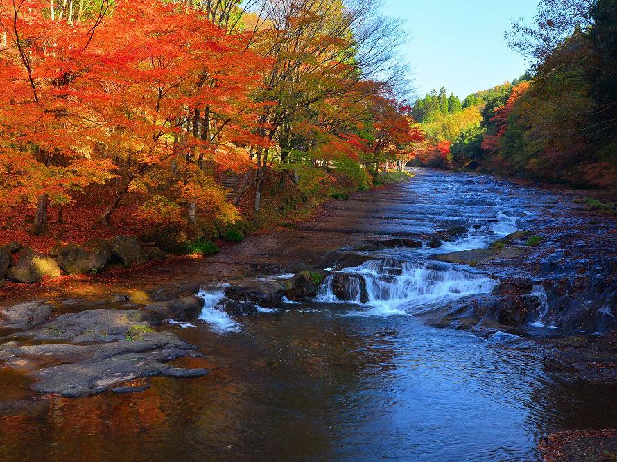 ナラやケヤキの自然林が鮮やかに色づき、絶好の紅葉スポットとして多くの人が訪れる。