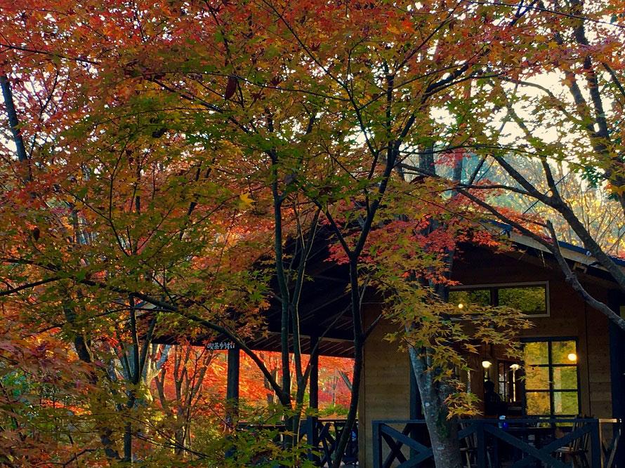 園内にある「喫茶ゆうすい」では、湧水で淹れるコーヒーやお菓子などを楽しめる。
